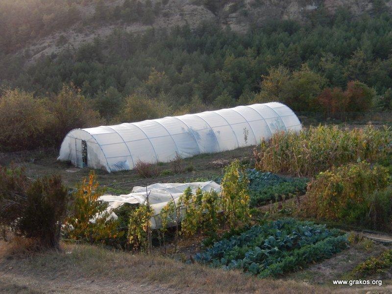 Huerta e invernadero